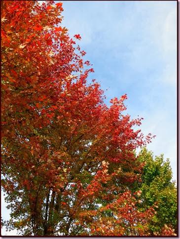 treesIMG_7783