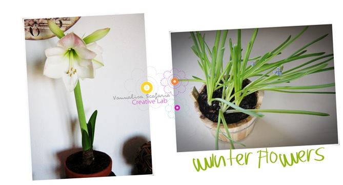 bulbs_vannalisascafaria_growing_with_love3