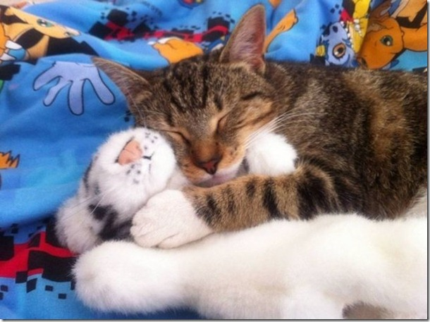 cats-stuffed-animals-24