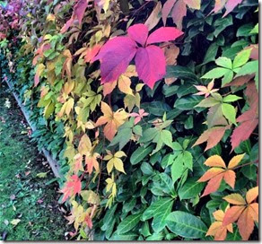 Outono Autora