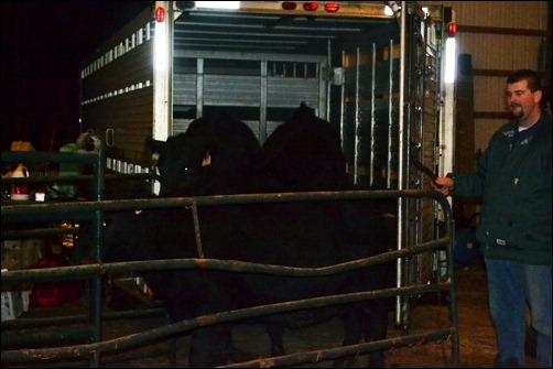 unload cows