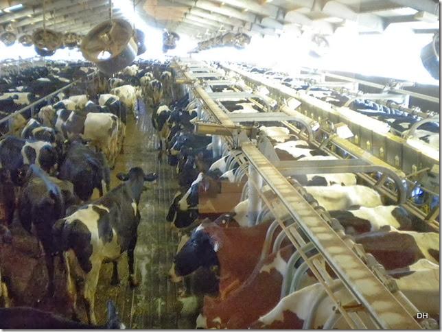 12-08-13 A Shamrock Farms Tour Stanfield (63)
