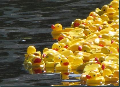 ducks in water910 (3)