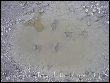 Passeggiata sull'argine dopo la piena - Padulle - 11 gennaio 2014 (19)