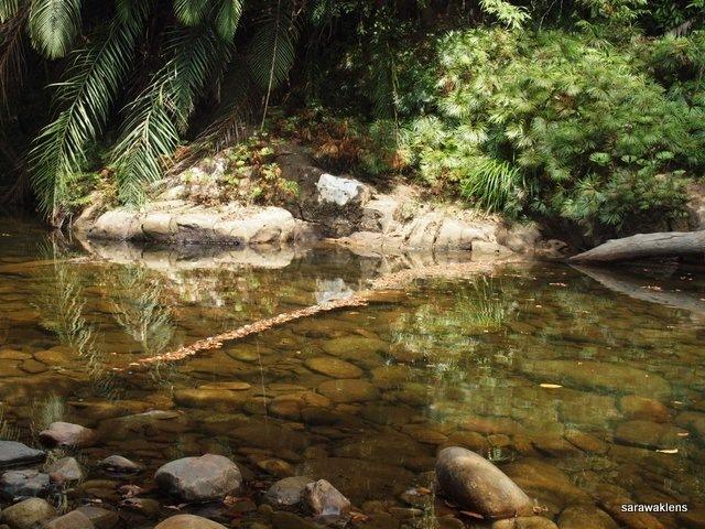 river_in_sarawak_04