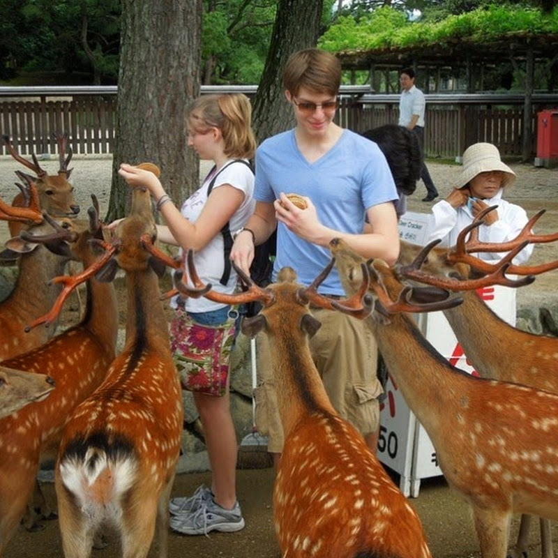 Nara, The City Taken Over by Deer
