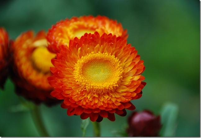 flores de papel DSC_0830