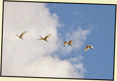 05h - Ibis Overhead