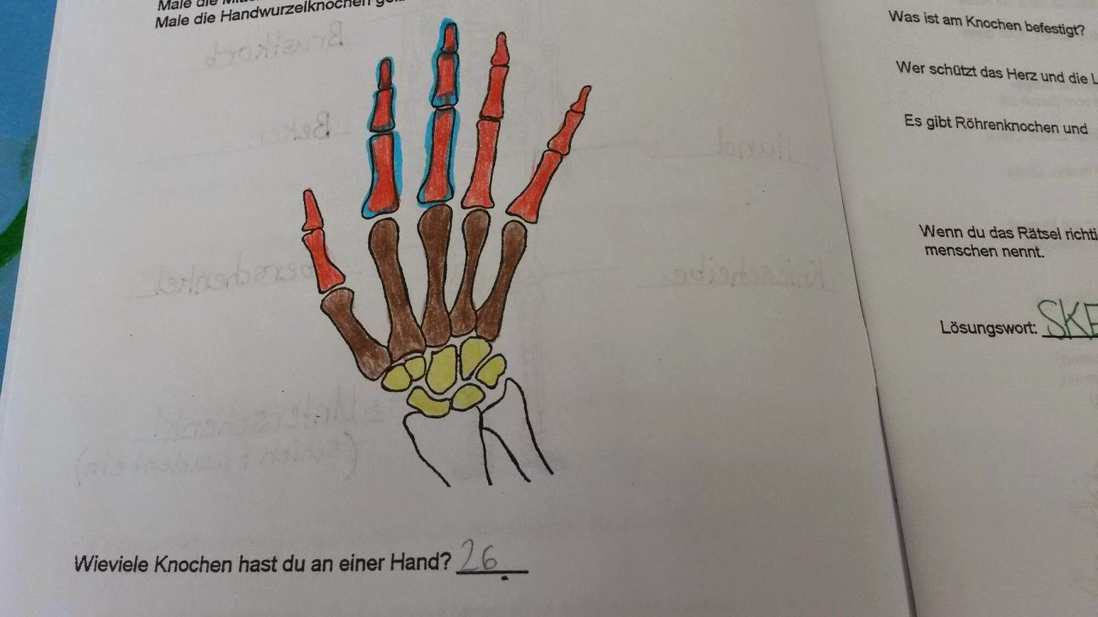 Berühmt Menschliche Knochen Diagramm Ideen - Menschliche Anatomie ...
