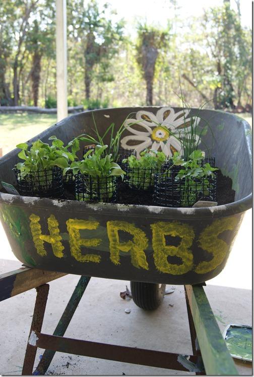 herb garden in a wheelbarrow