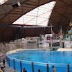 Boudewijn Seapark-025.JPG