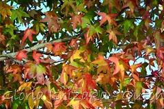 35 - Glória Ishizaka - Folhas de Outono