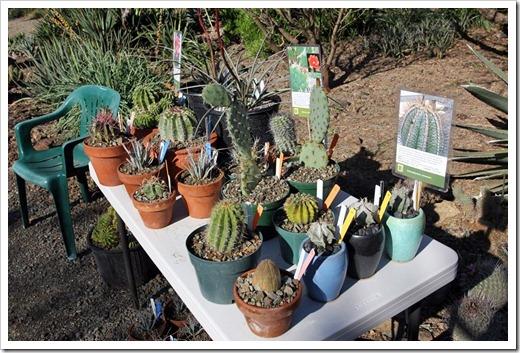 120414_RBG_cactus_table
