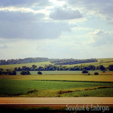 The view from our doorstep {Sawdust and Embryos}