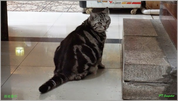 龙门肥猫~