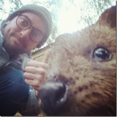 selfies-australian-quokka-004
