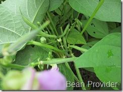 Provider_bean1