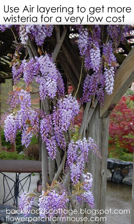 wisteriablog