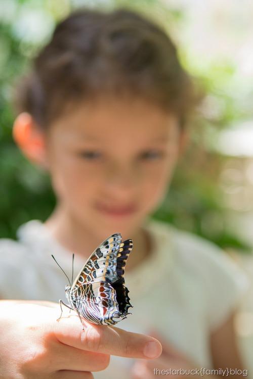 Callaway Gardens butterfly garden blog-16