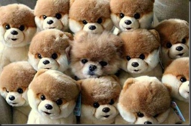 camouflage-chiens