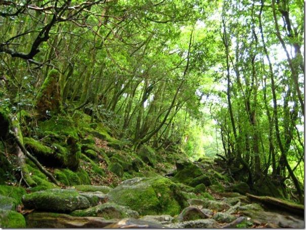 floresta no japão (8)