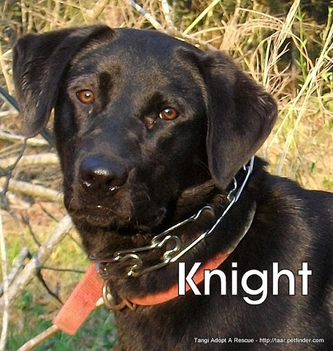 knight black lab fm