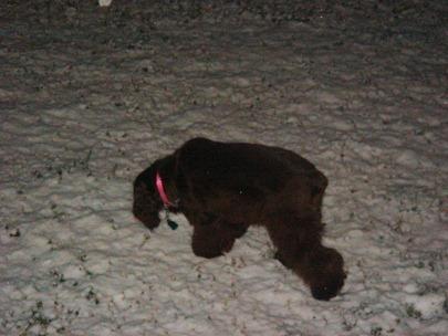 snow 2_19_2012_6