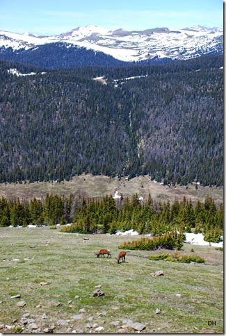 06-19-14 A Trail Ridge Road RMNP (274)