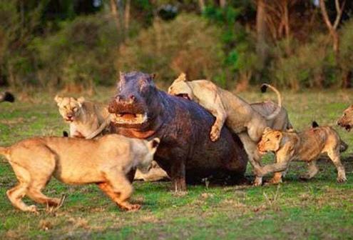 super-ataque-na-selva