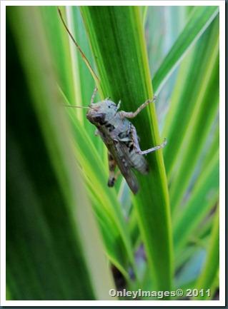 grasshopper0711 (2)