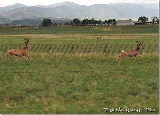 08-07-13 deer near LaVeta 17