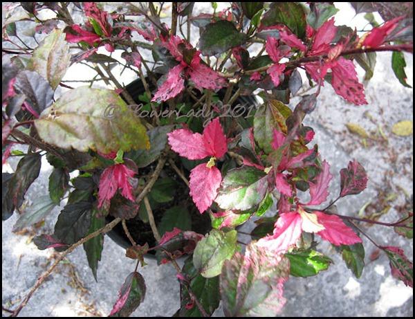 03-21-roseflake-hib2