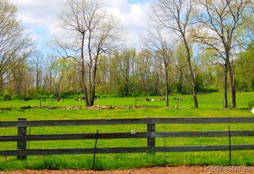 6. pasture-kab