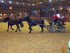 2007.03.05-032 présentation chevaux