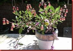 pot plant full
