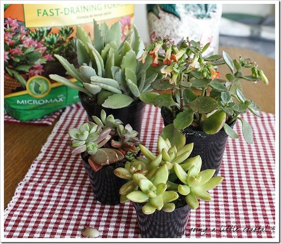 succulents5_edited-1