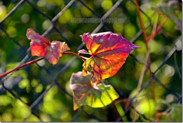 Herbstsonntag (13)