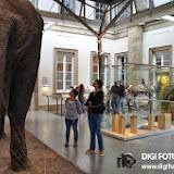 001-05_10_13-Rosensteinmuseum-30.jpg
