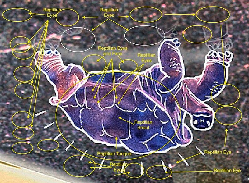 2015 orig inverted flipped eye in turtle