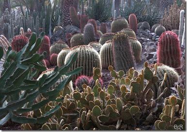 Kaktus_Kaktus