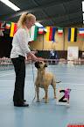 20130511-BMCN-Bullmastiff-Championship-Clubmatch-1875.jpg