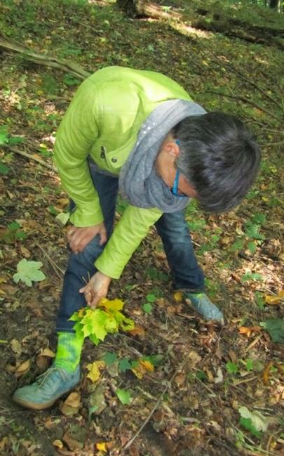 Herbstblätter in Sockenfarben