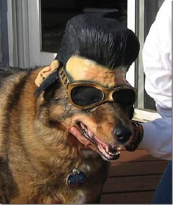 dogs-no-clue-24