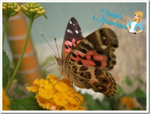 borboleta7