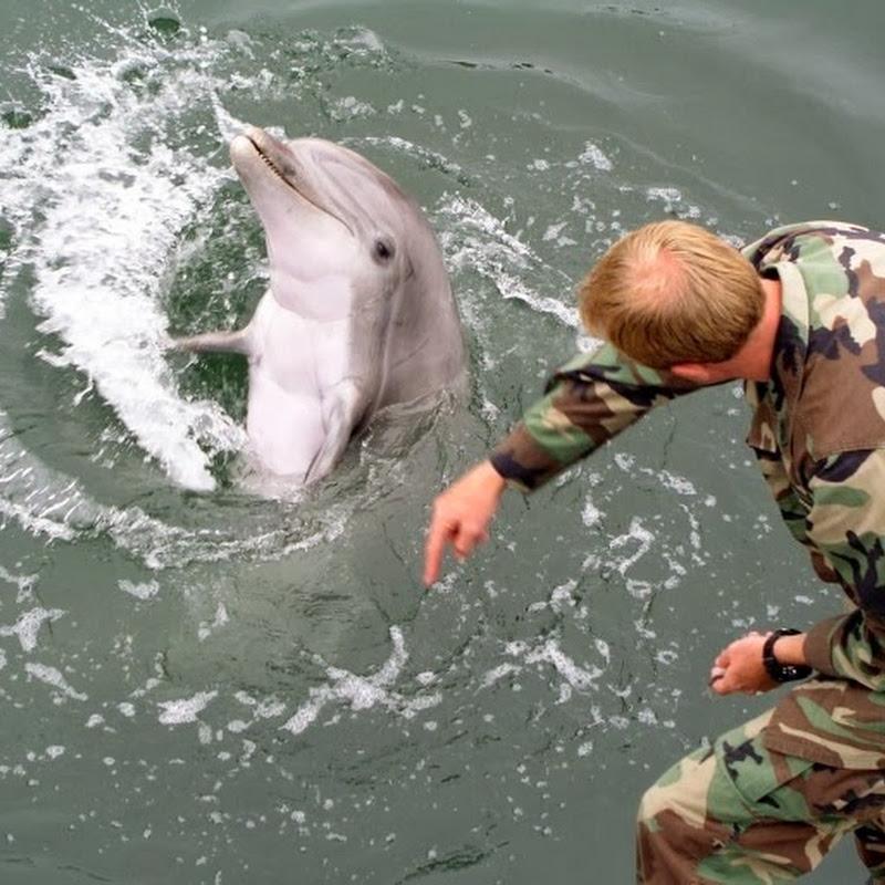 10 estranhos planos militares para usar animais como armas