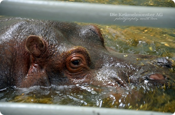 Zoo Frankfurt 100713 (75)