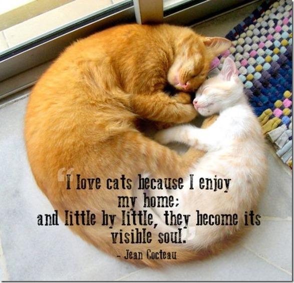 pet-quotes-love-15