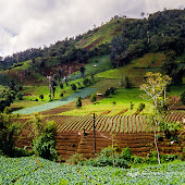 Indonesia-Sulawesi-Rurukan.jpg