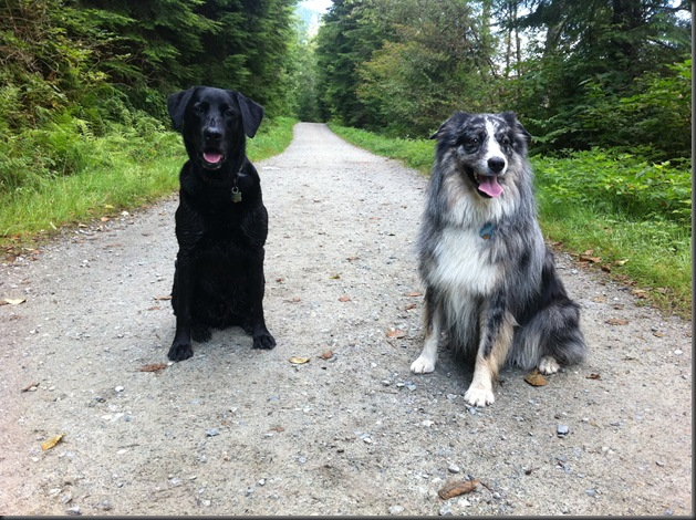 Mojo and Buddy 3