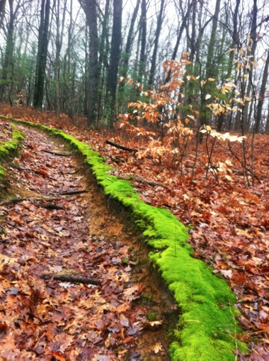 Super Colorful Moss in Fall